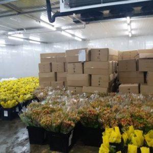 Flower Cold Room